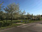 Skab vækst i Solrød Kommune